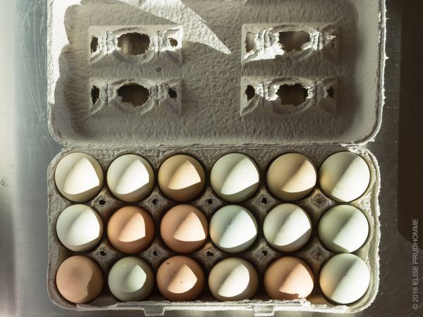 One dozen handpicked farm fresh organic eggs of different colors