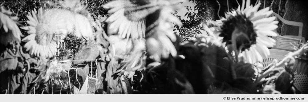 Black and white panoramic photograph of a bouquet of sunflowers, Arles, France. Analog photography series entitled Lieux-dits by Elise Prudhomme.