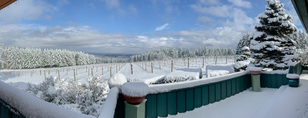 Panoramic view of snow-covered Torio Vineyard on Chehalem Mountain, Willamette Valley, Oregon