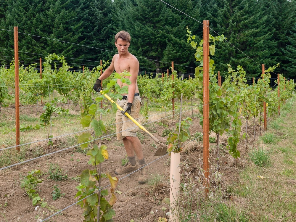 Colin Prudhomme working on Torio Vineyard with a hoe.