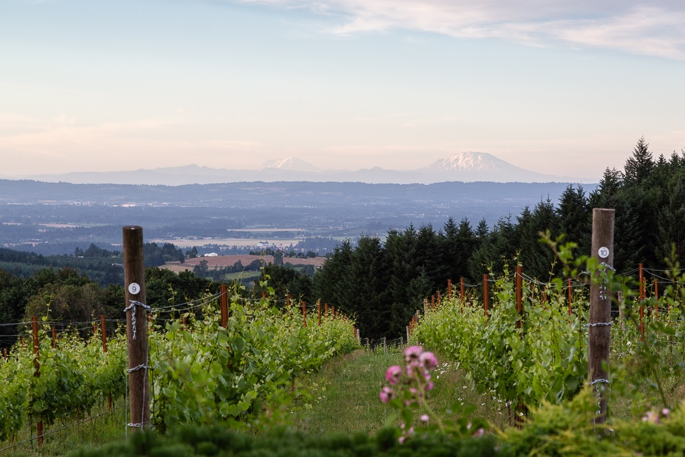 Early morning looking out over Torio Vineyard and Mount Saint He